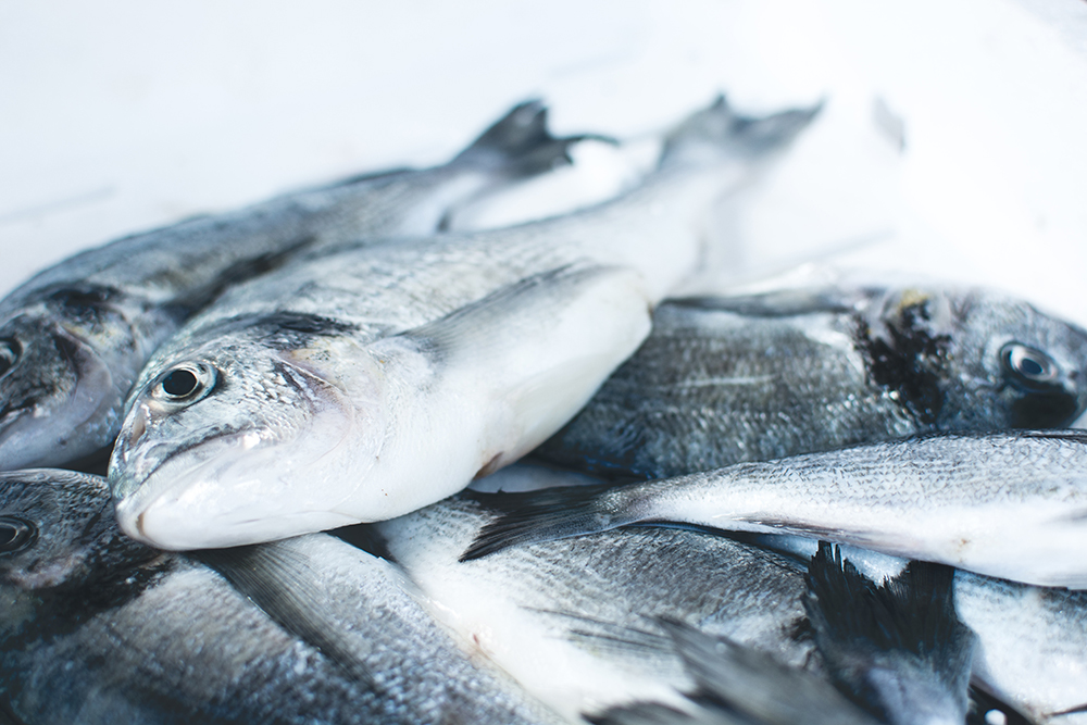 Principales diferencias entre el pescado azul y el blanco